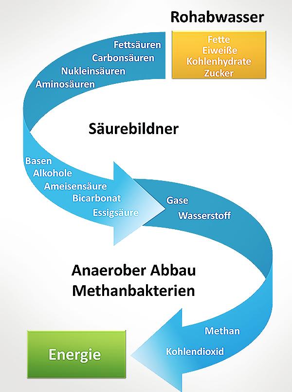 Anaerober Abbau Acetogenese Acidogenese Methanogenese